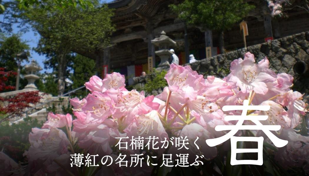 春 石楠花が咲く薄紅の名所に足運ぶ